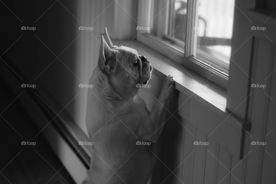 Oyster whenever there are people outside. She always want to observe them. She wants to play with every people she sees. Our baby princess is a sweet loving dog.