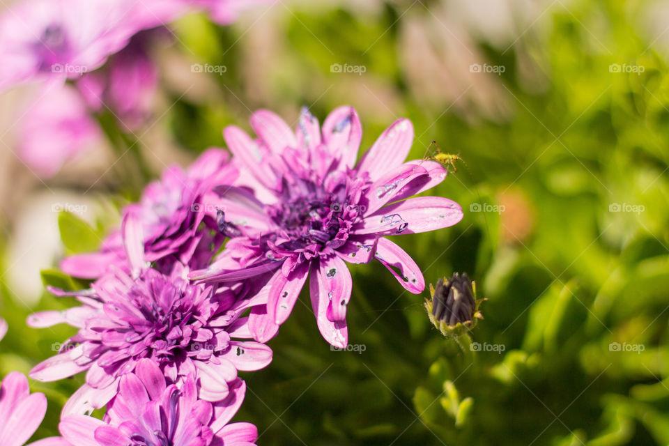 Nature, Flower, Garden, Flora, Summer
