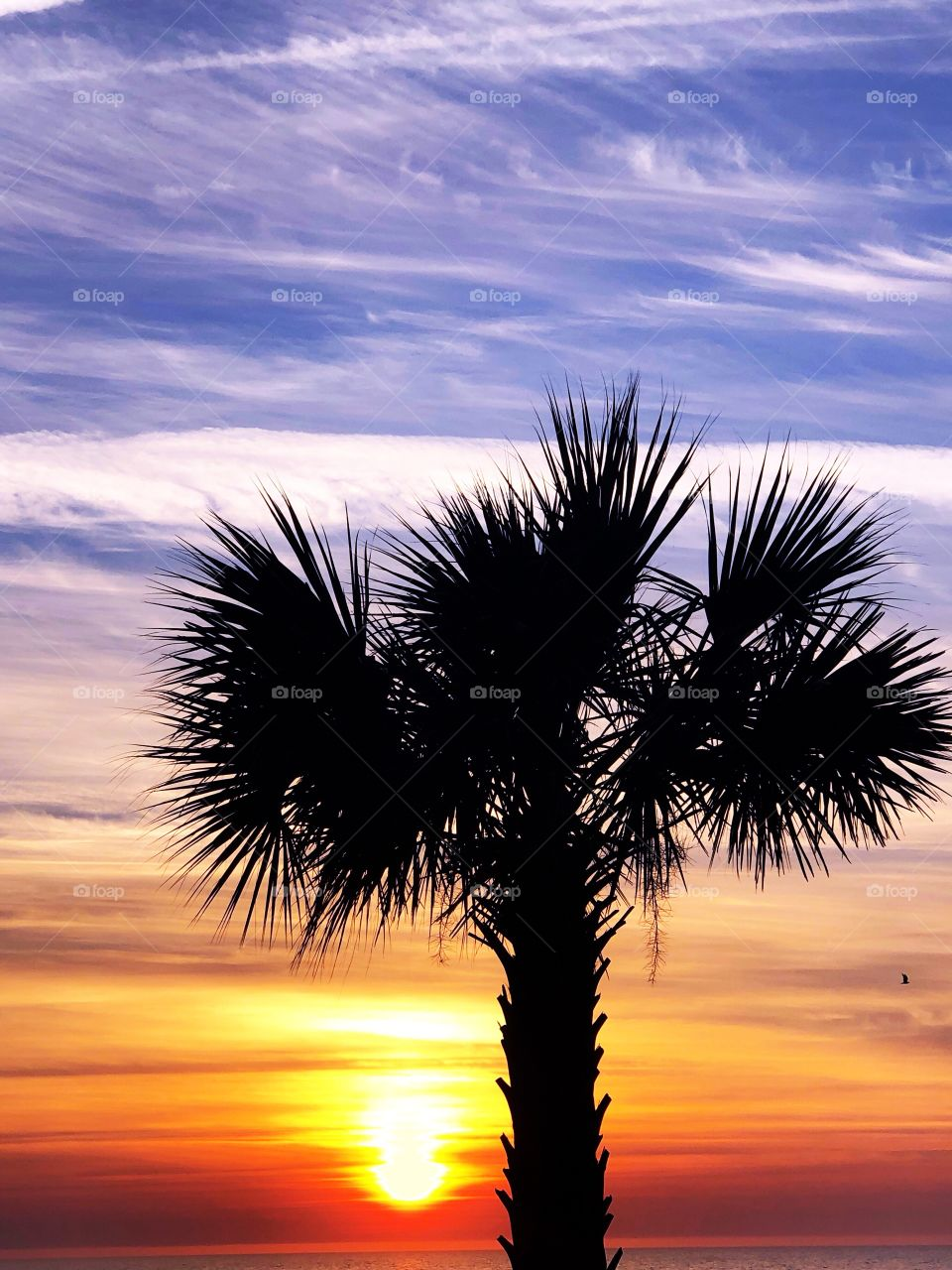 A Palmetto tree is silhouetted against beautiful Low-Country Sunrise.