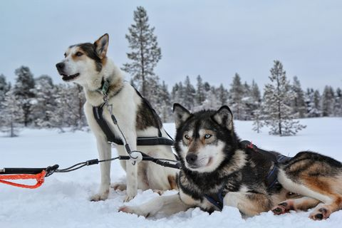 Two dogs on snowy land