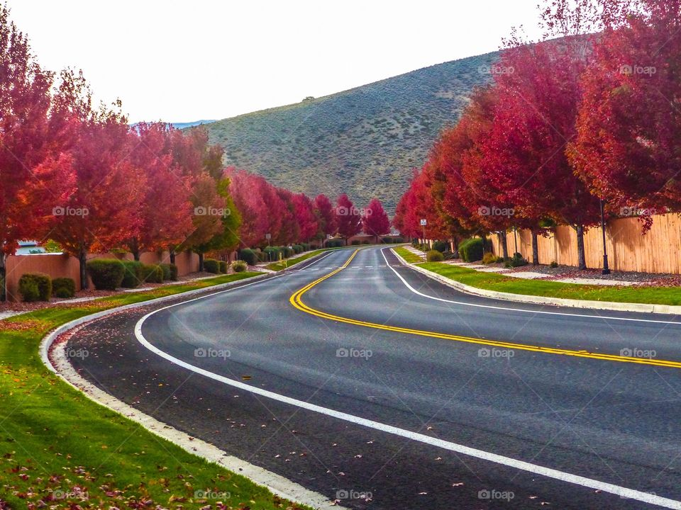 A road full of colorful trees