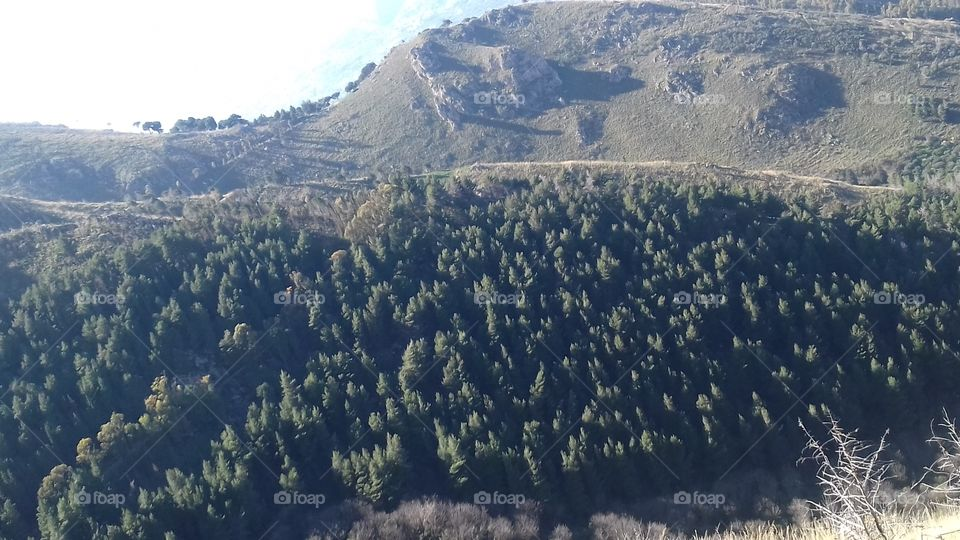 Photo of a valley, including trees, green mountain and a blue and clear sky in sicily. A great wood under the mountain light up by the hard Sicilian  sun