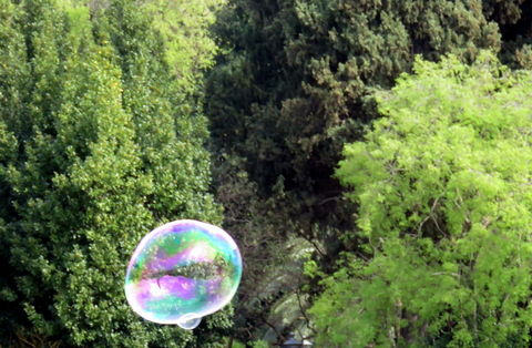 iridescent bubble in the green trees background