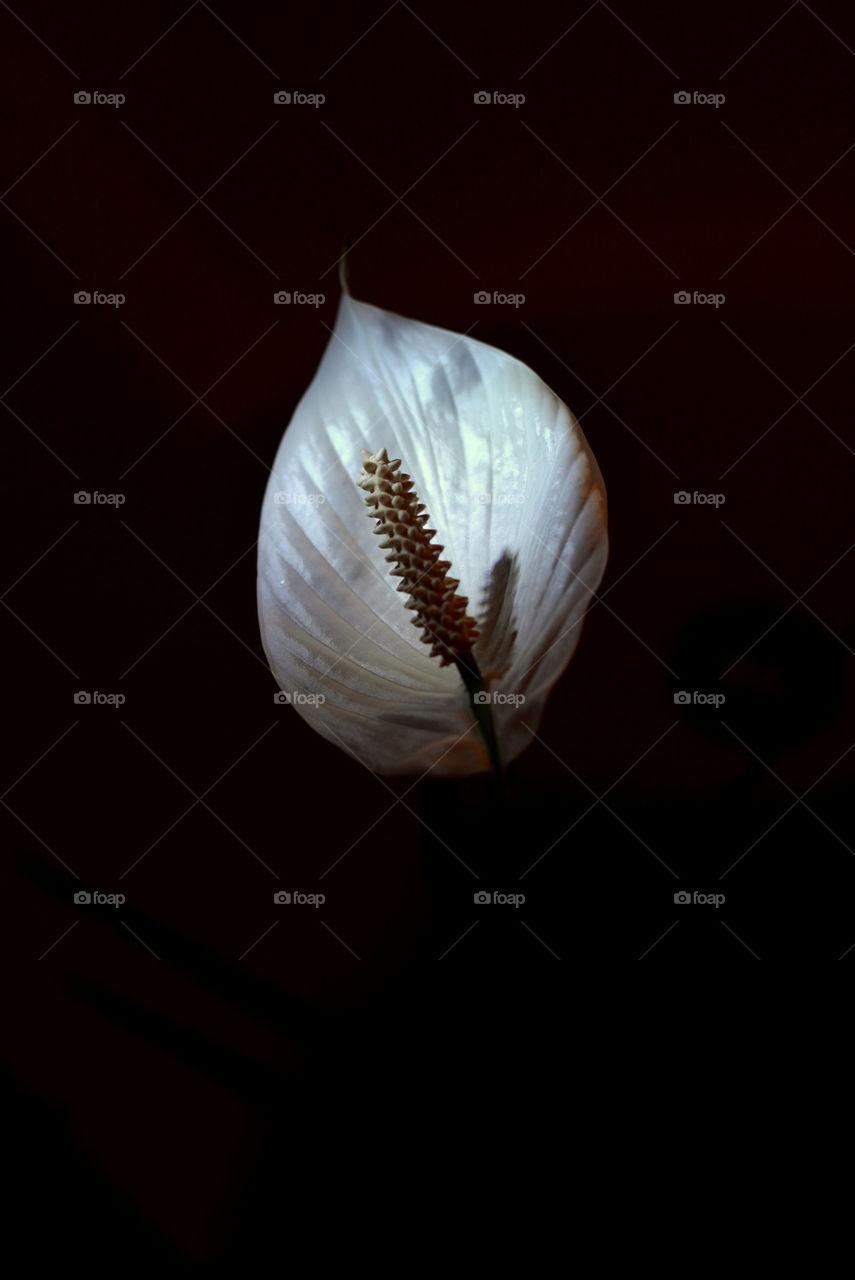 My fvrt flower at home