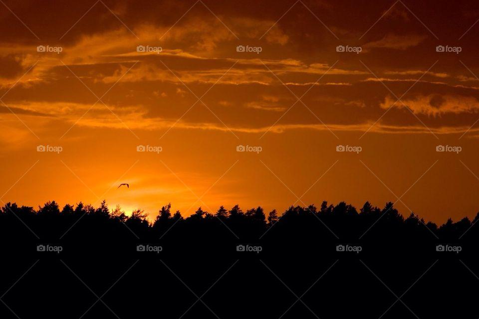 sky nature sunset trees by cekari