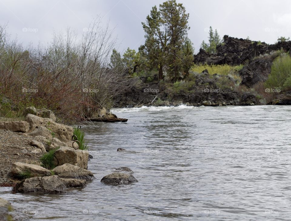 The beautiful spring waters of the Deschutes River in Central Oregon flows along its ponderosa pine tree covered banks near Lava Island.