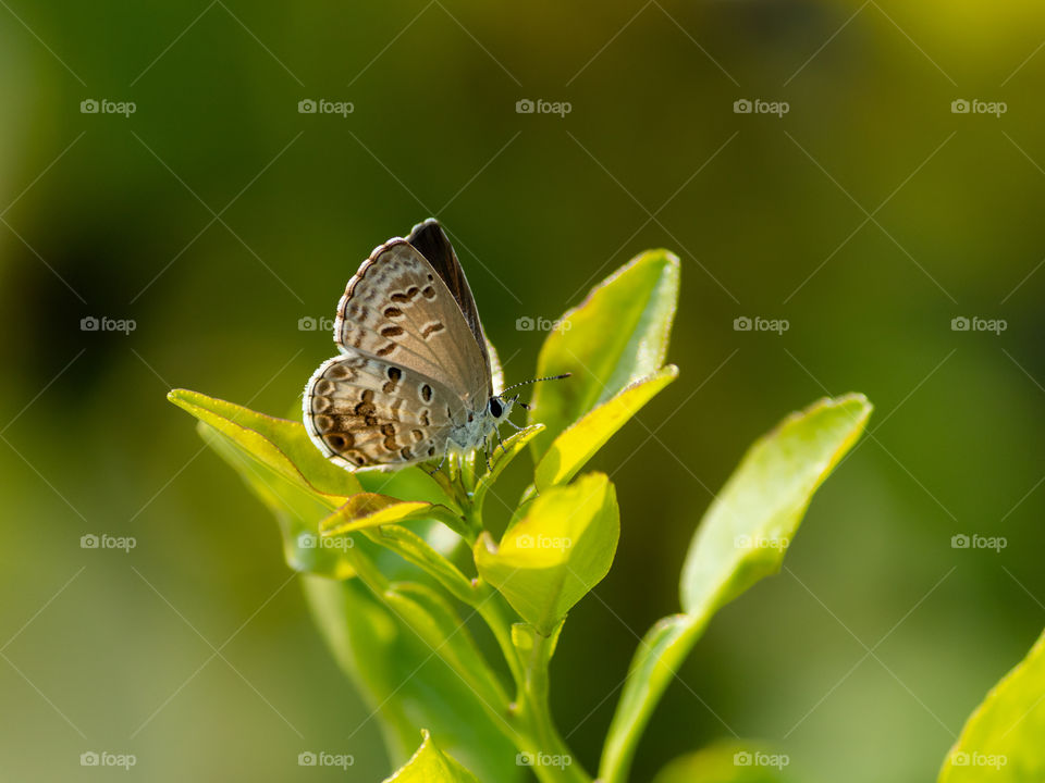 Beauty of Nature 🦋