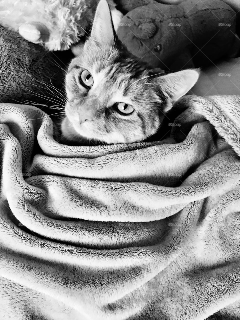 Darling black and white photo of orange tabby cat all cuddled up in comfy blanket!