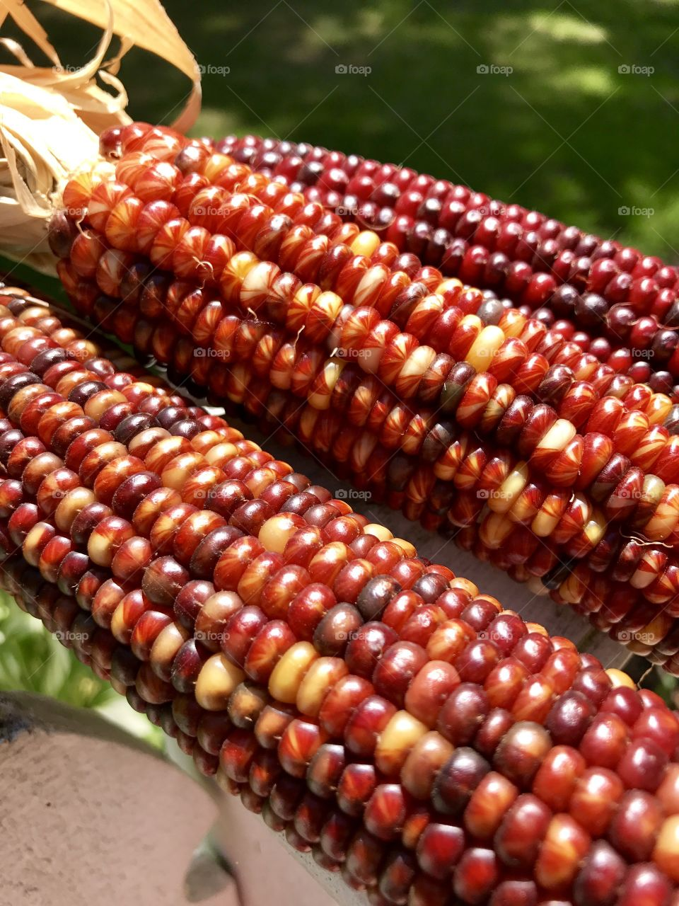 Colorful verities of corn