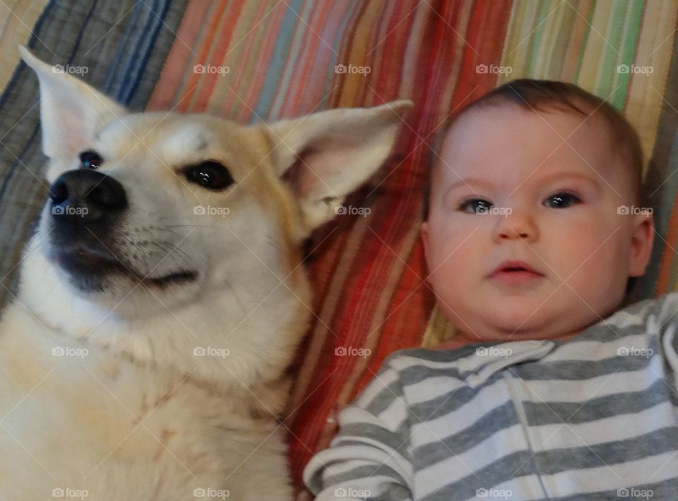 Baby Girl With Family Dog