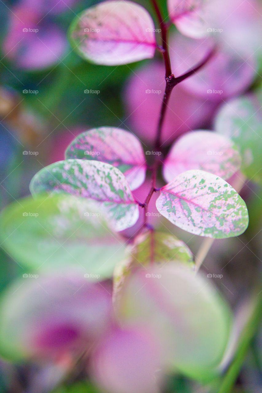 Colorful wild plant