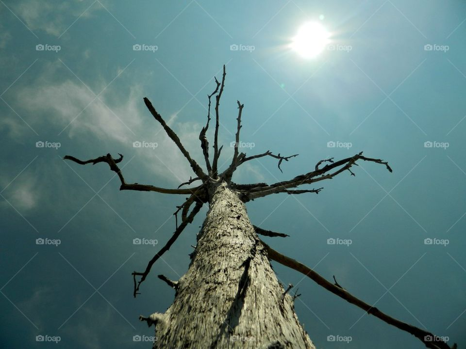 Dead tree against sky with sunlight
