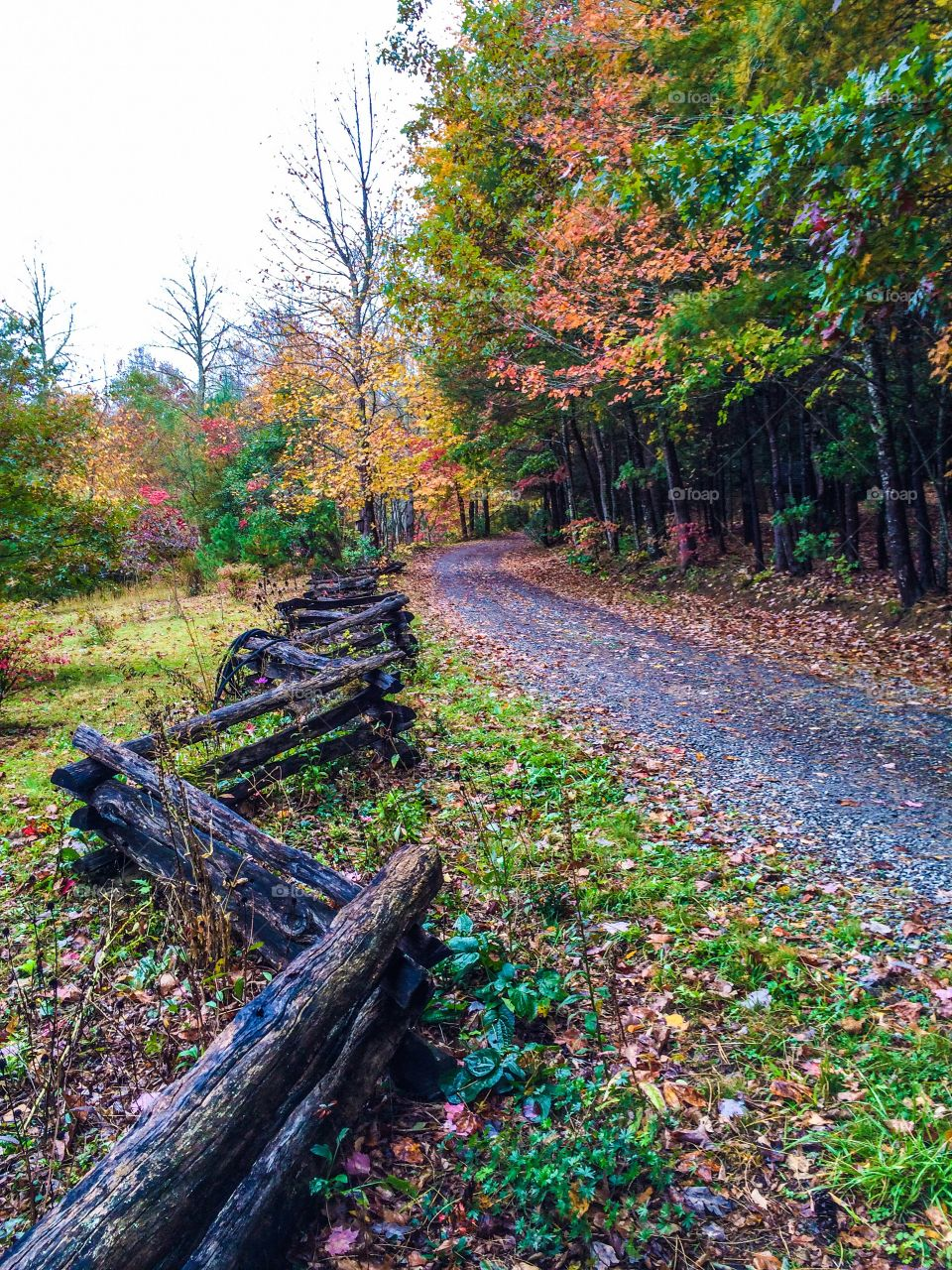 Autumn trees near empty road