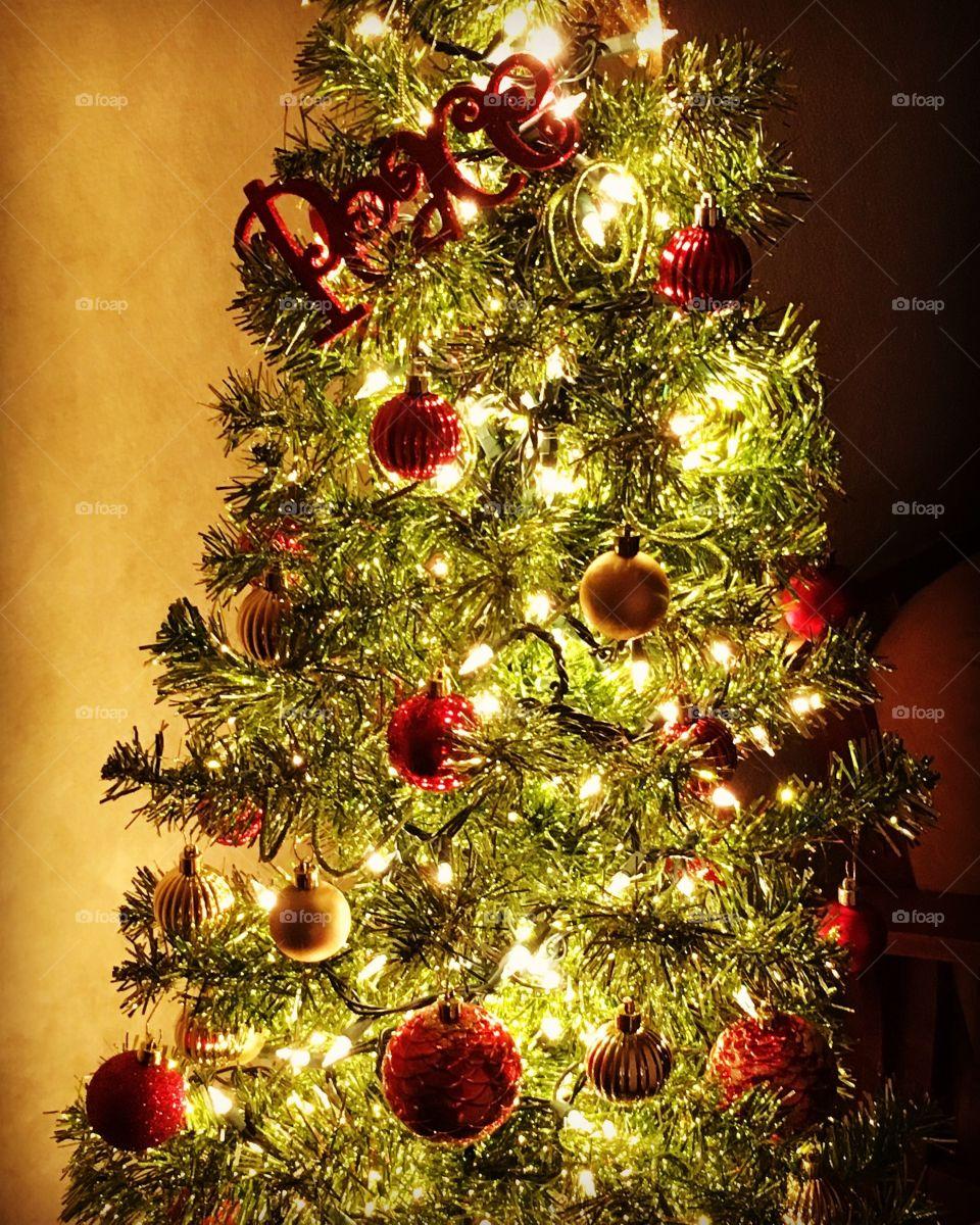 Lighting the annual Christmas peace tree!
