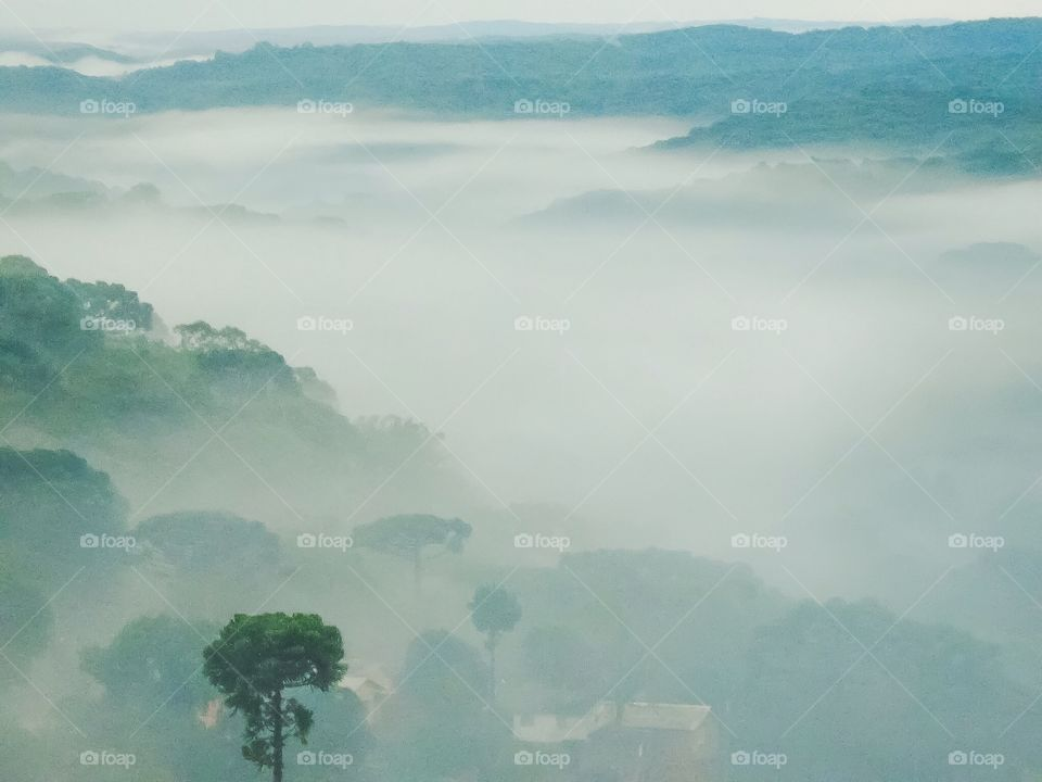 High angle view of forest in morning mist