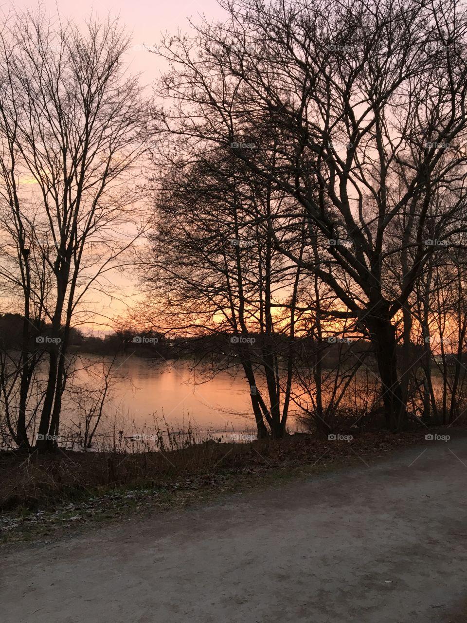 Sunset lake with tree