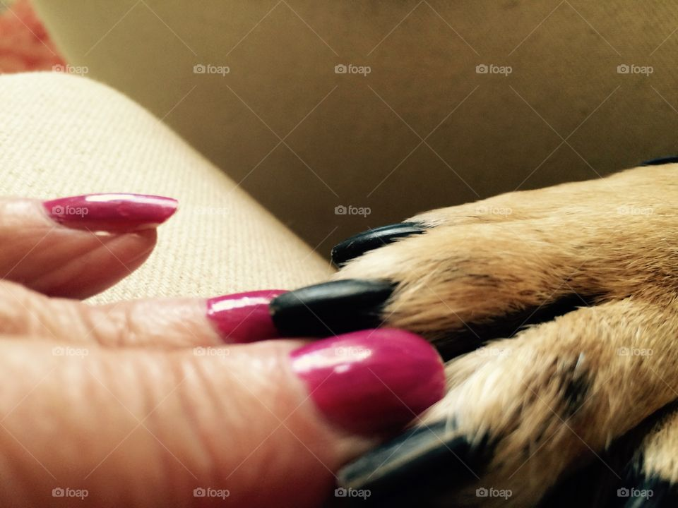 Fingers and paws