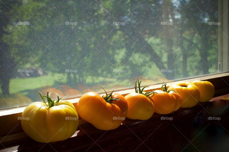 Freshly picked yellow and orange tomatoes on a sunny windowsill, blurred tree background