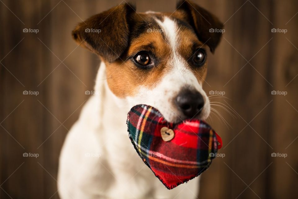 Cute pet with heart