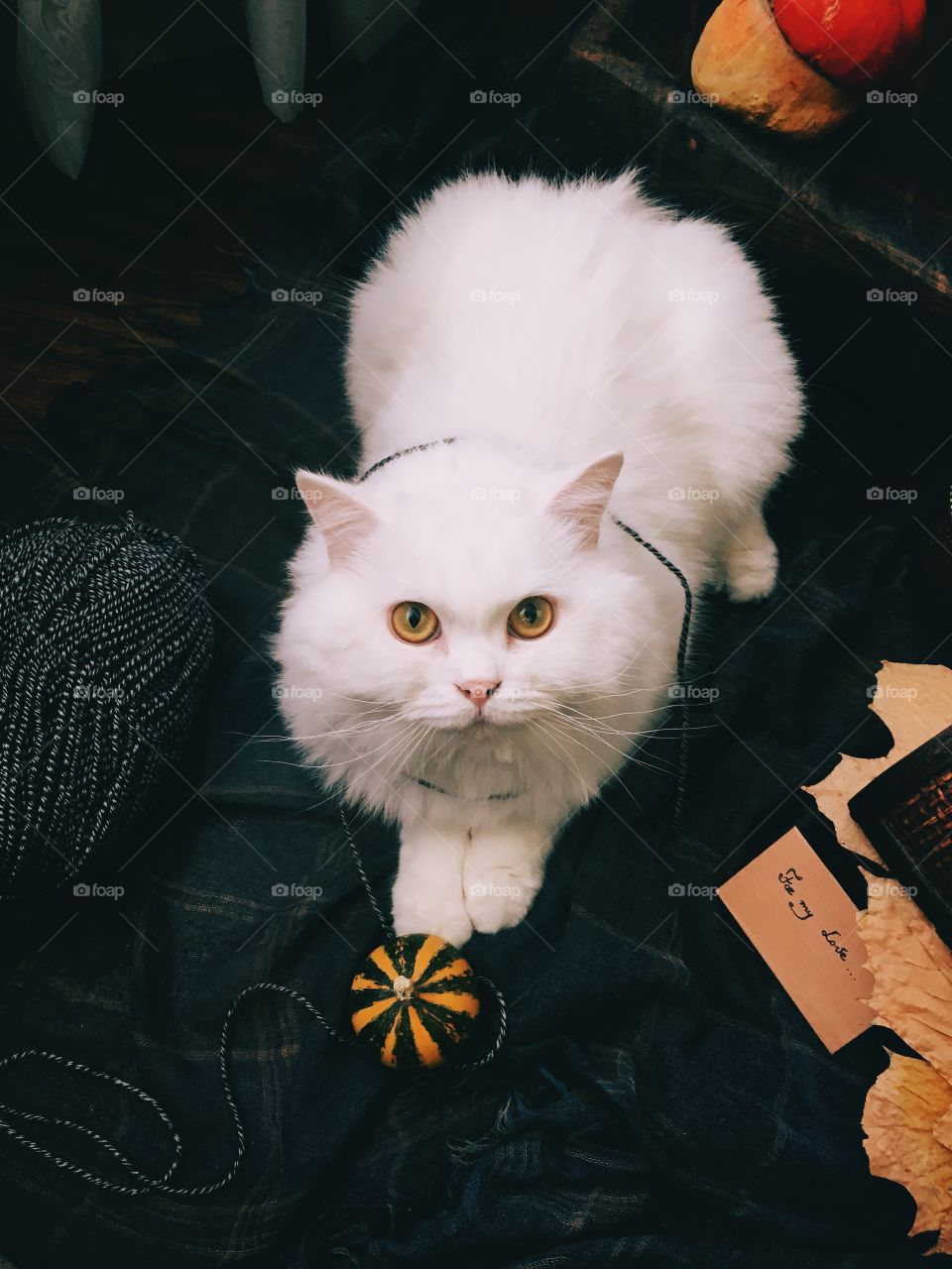 High angle view of white cat looking at camera