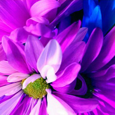 Flower, Nature, Flora, Beautiful, Blooming