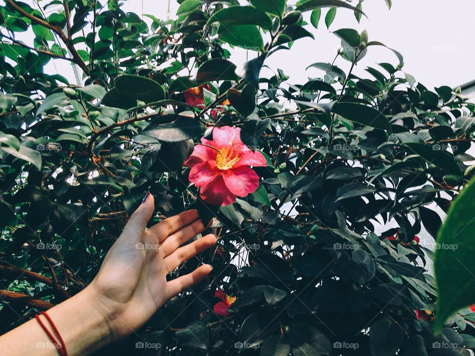 A human picking a flower