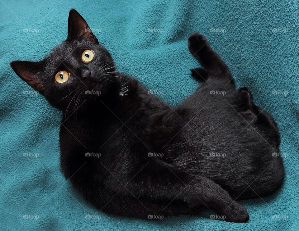 model sweet cat pet by dryair