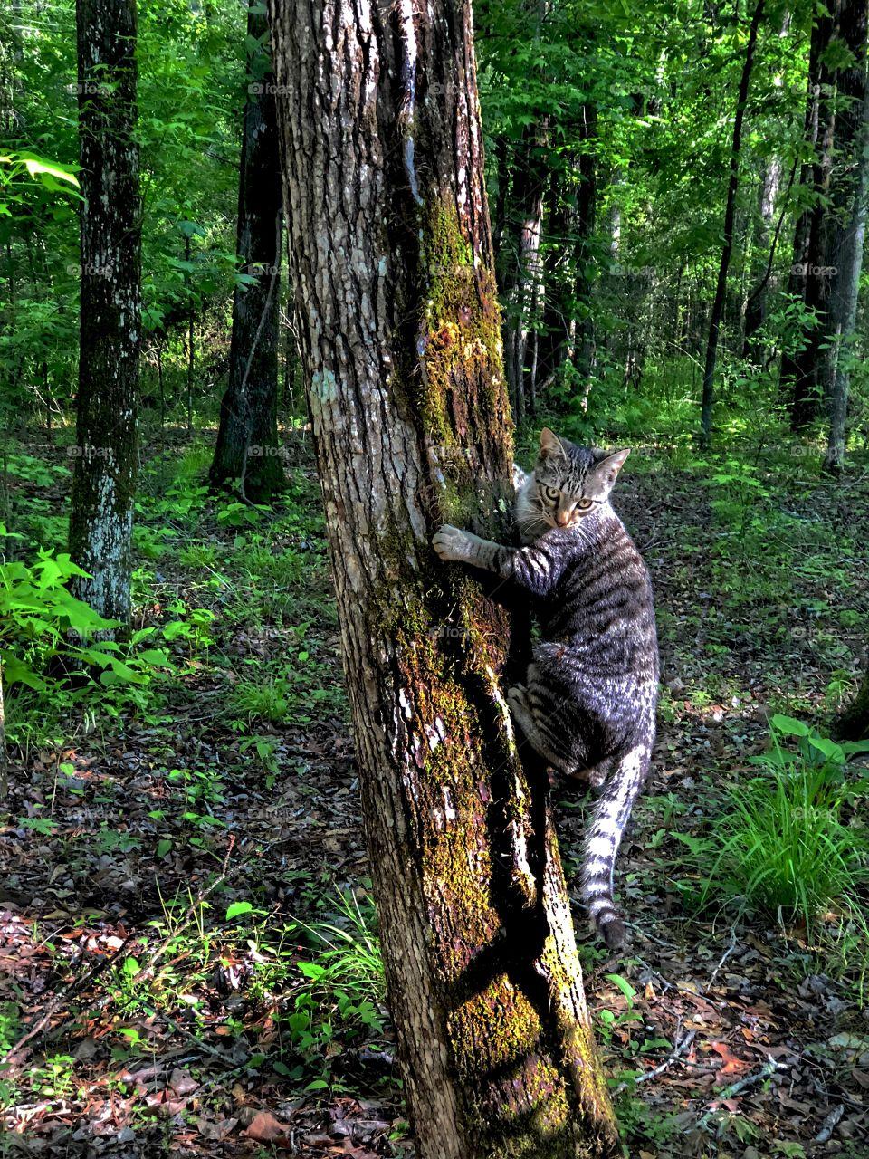 Benjamin Linus Climbing Tree