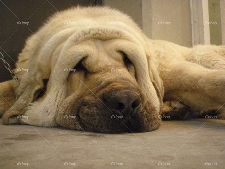 Cute dog having fun on the floor