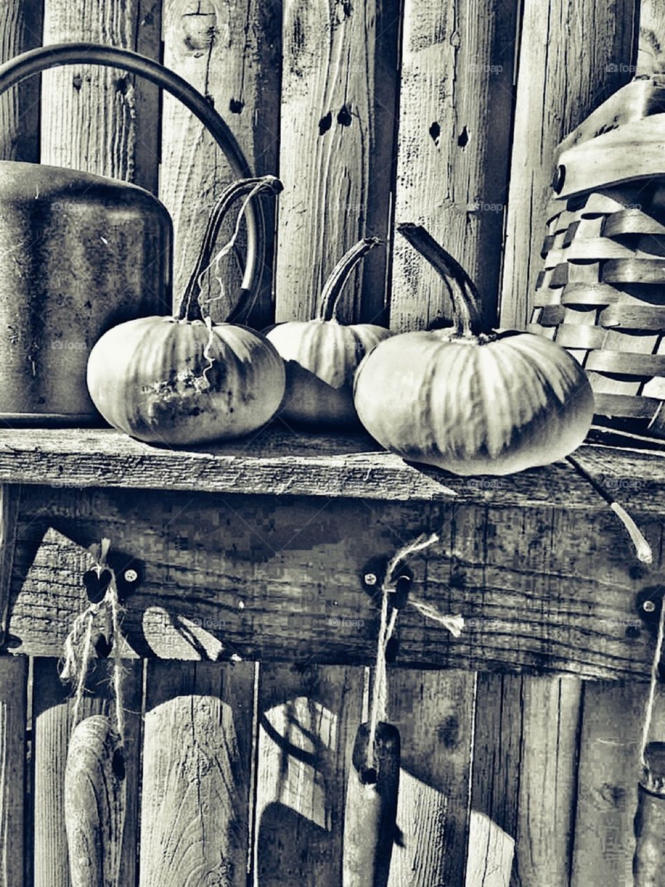 Rustic wood garden fence and shelf with miniature pumpkins old copper watering can ,  a basket and hanging garden tools outside decoration