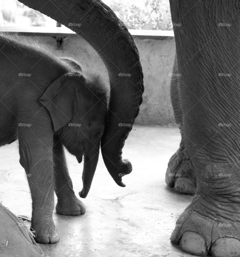 Elephant mom and daughter