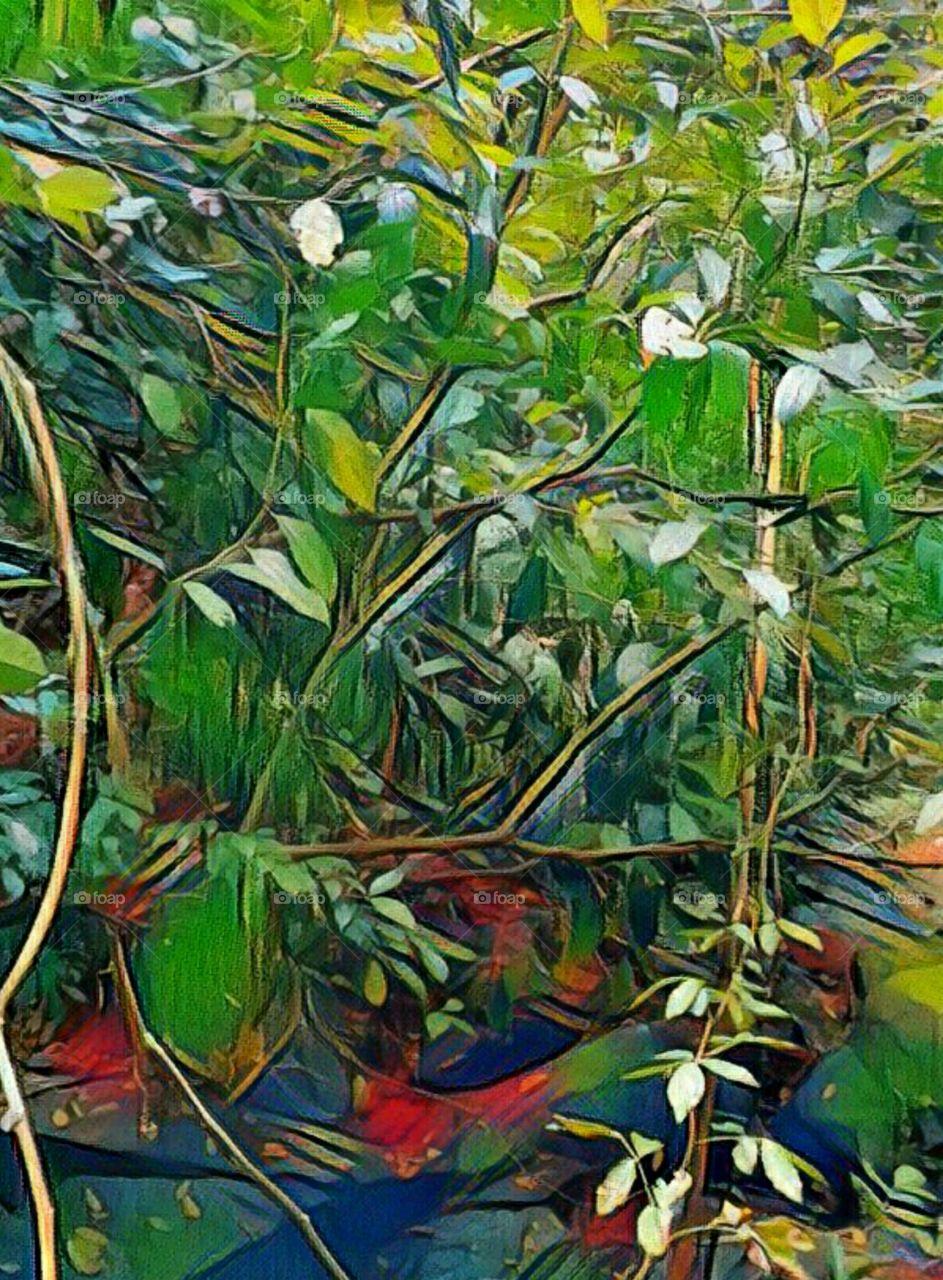 Jungle Vine  Size 1794*2433  3mb
