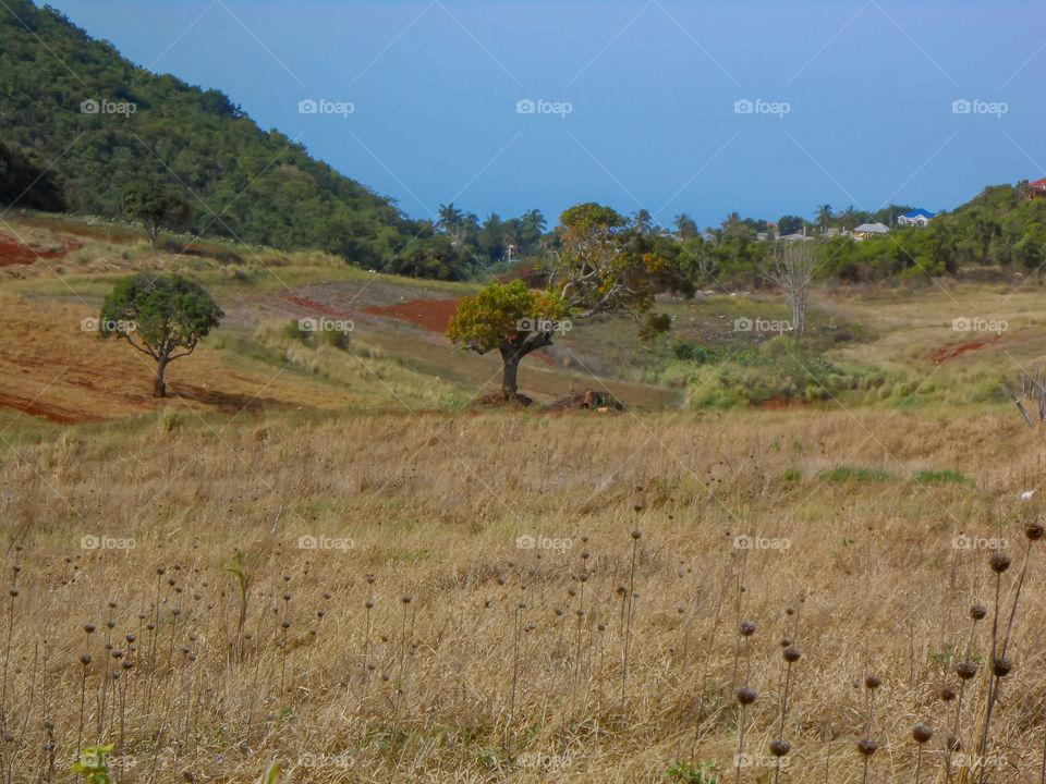 Dry Weather Landscape