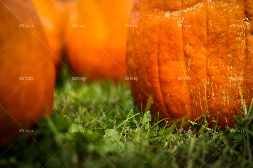 Pumpkins on grassy field
