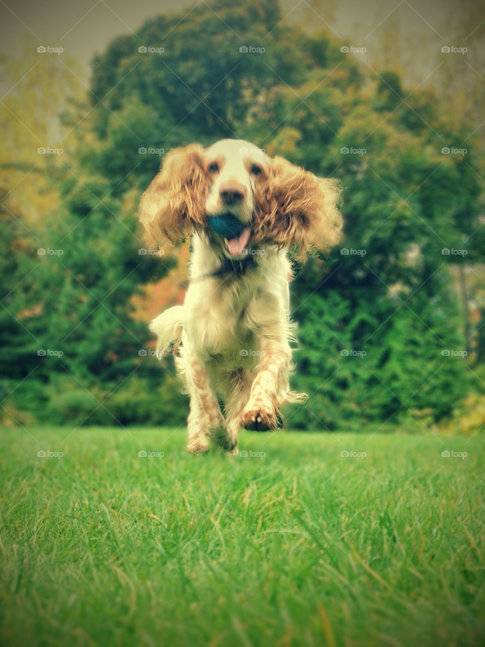 green grass play dog by vsusov