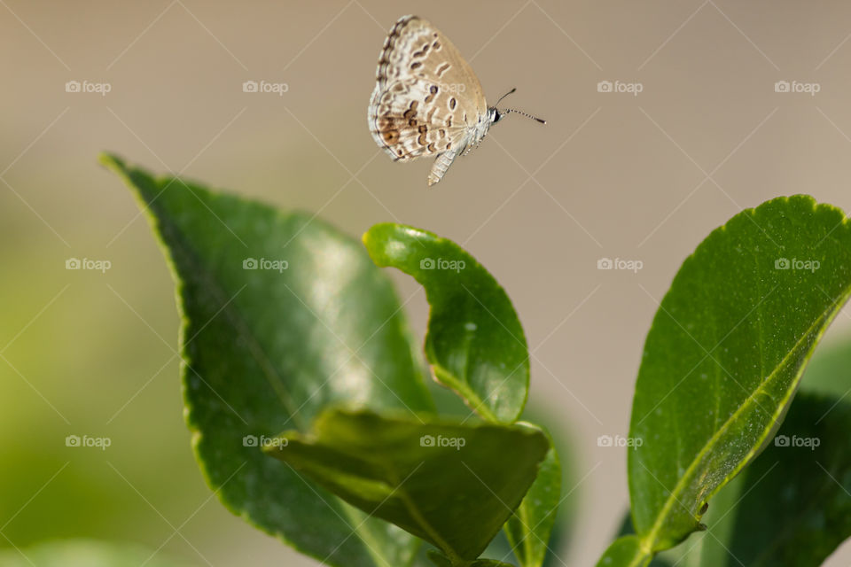 Flying Butterfly 🦋