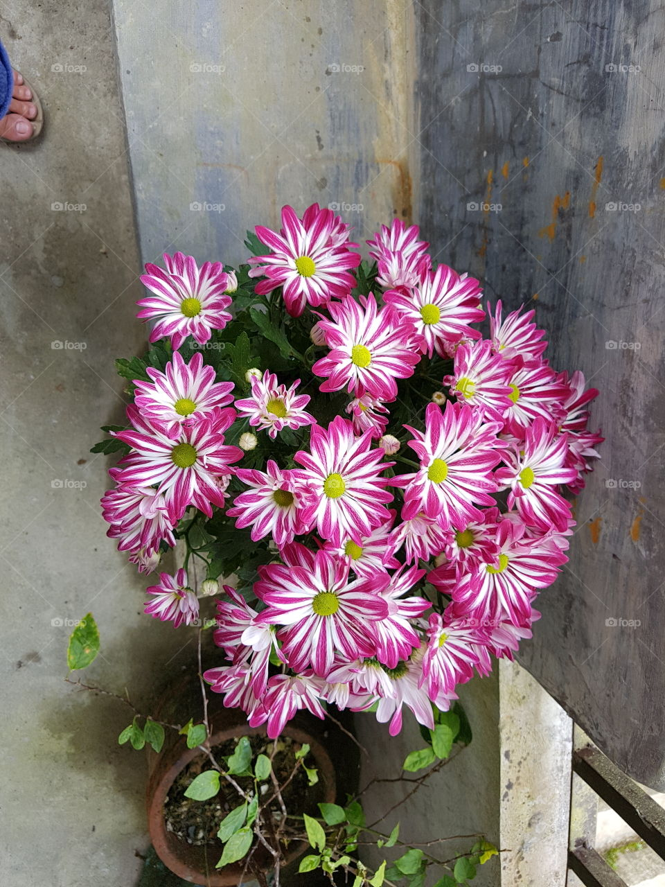 Floral in time. It is a beautiful day seeing flowers such as this. Brightens s