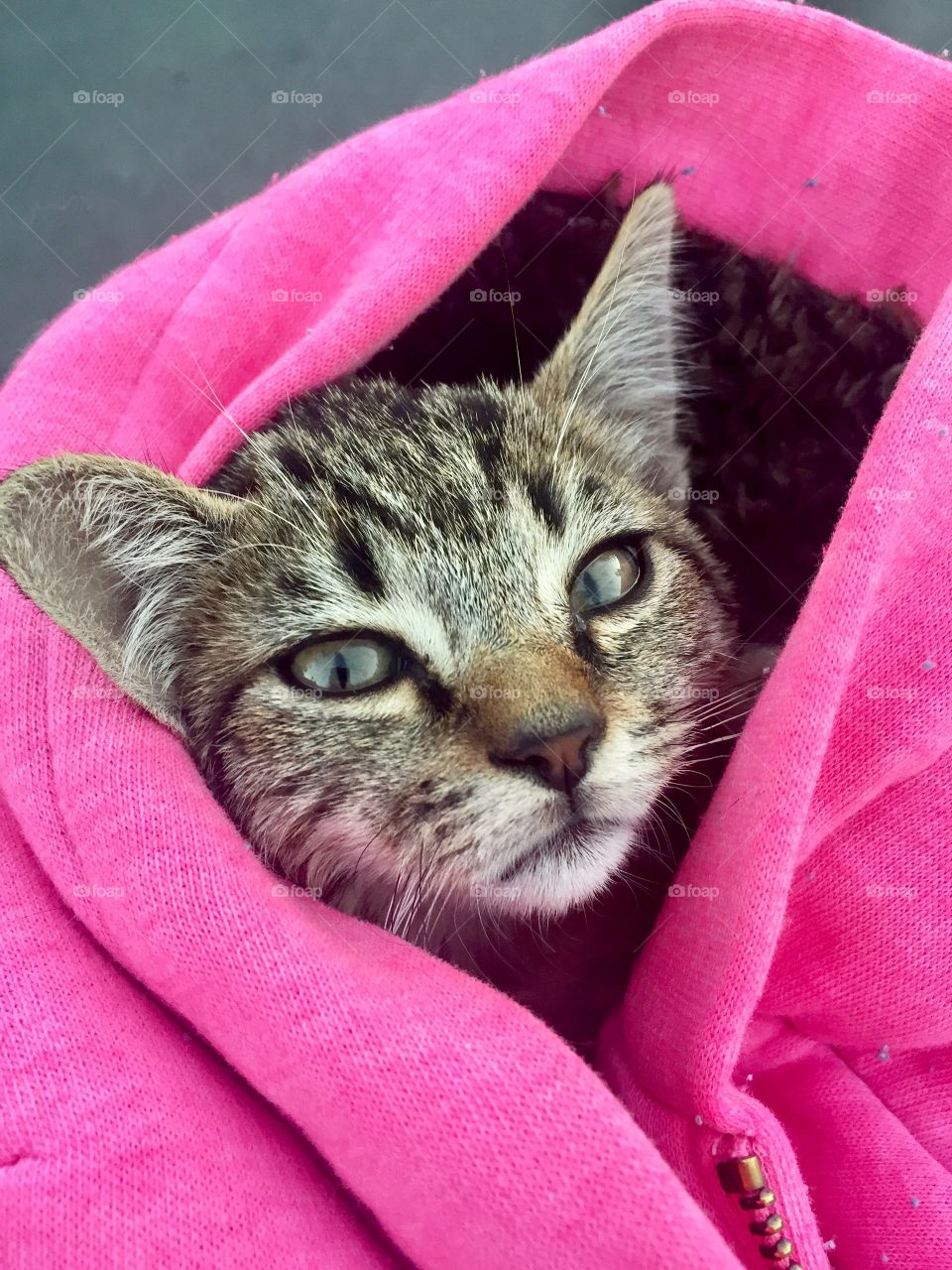 Close-up of a cat in pink jacket