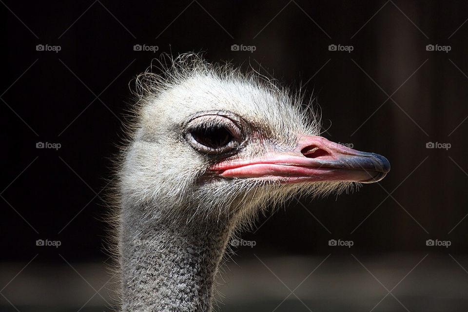 bird zoo eyes look by dryair