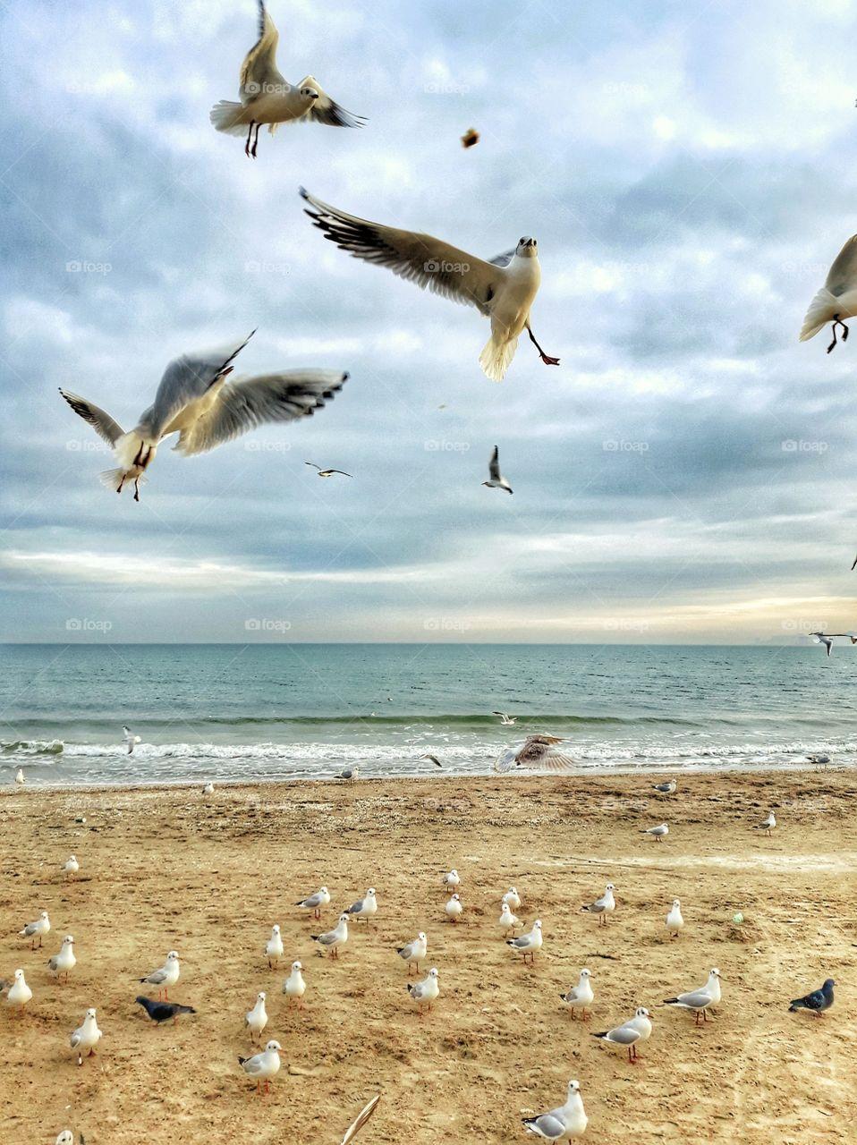 birds on the beach, sunset