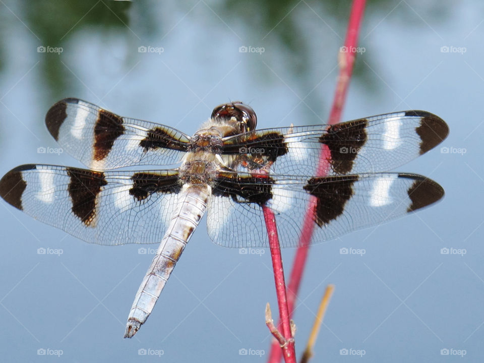 Insect, Nature, No Person, Dragonfly, Wildlife