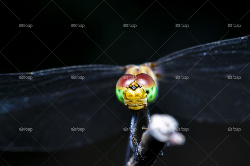 the colorful face of the dragonfly