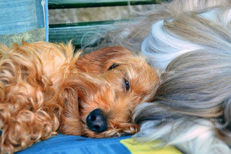 The cutest dog ever taking a nap