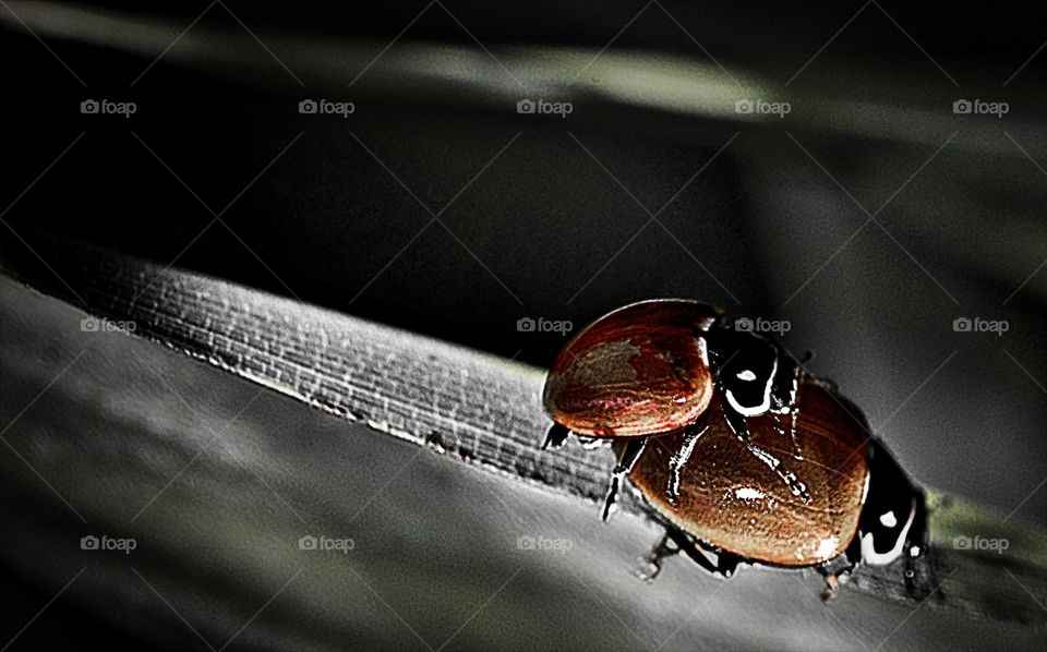 Dark, Insect, No Person, Reflection, Color