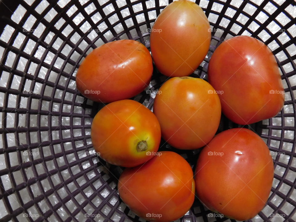 Bunch of Tomatoes in bucket -Scientific name of the Tomato is Solanum lycopercicum .