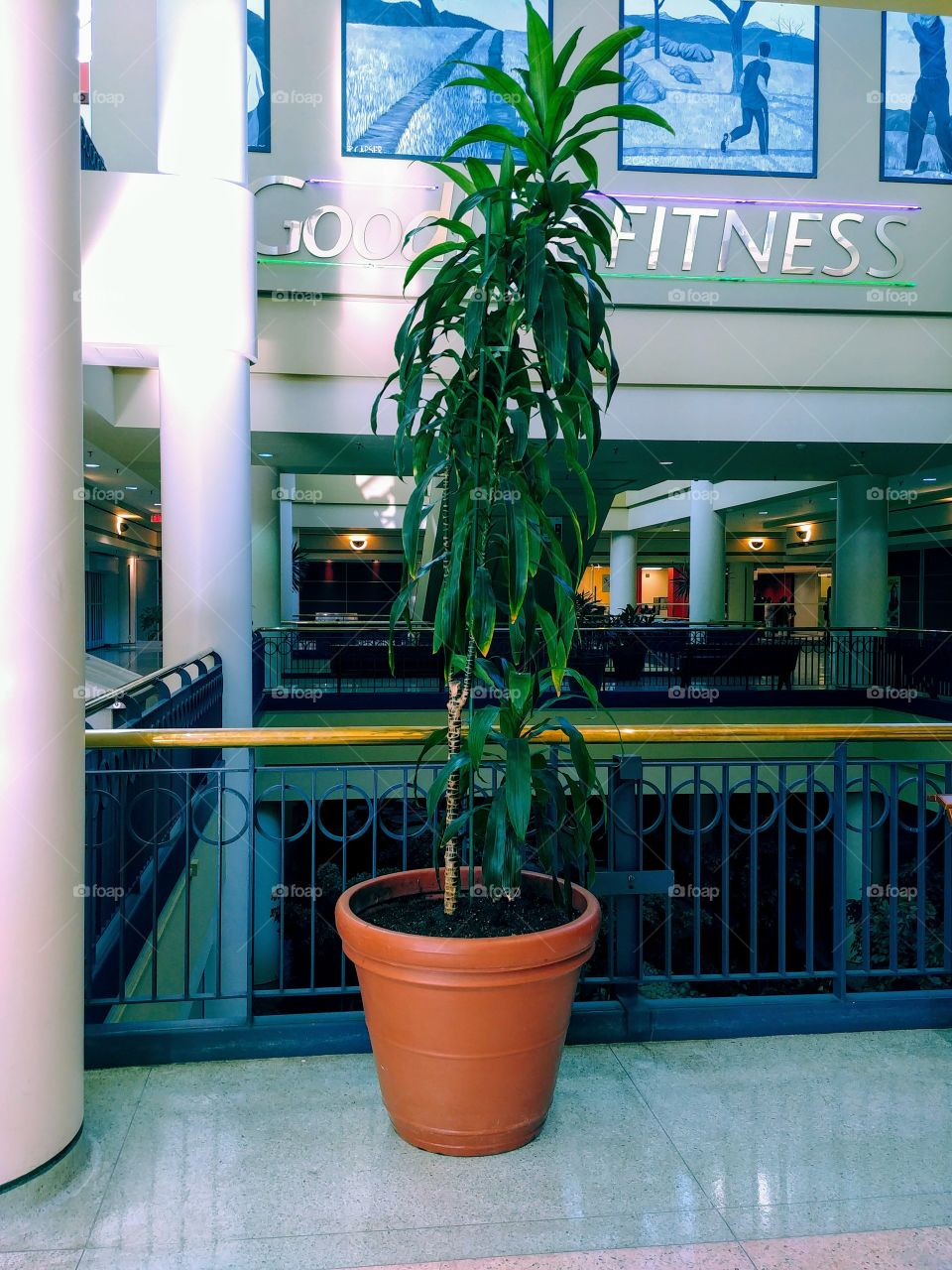 Standing Tall Plant In Mall.