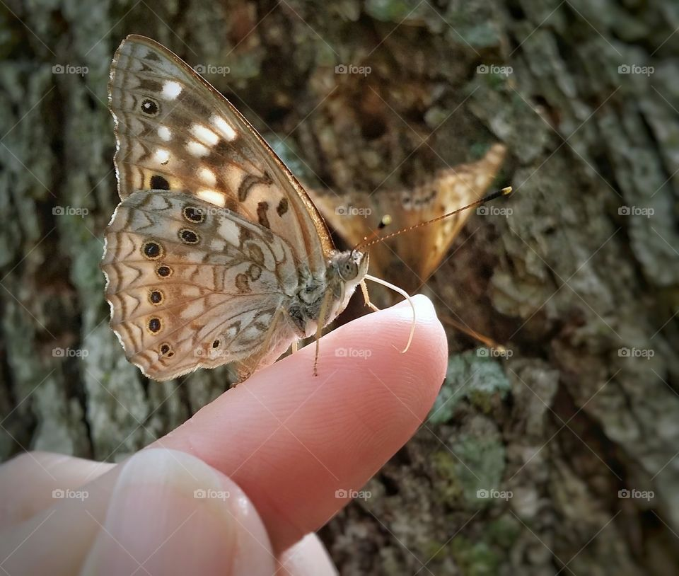 Butterfly on Tip of a Finger