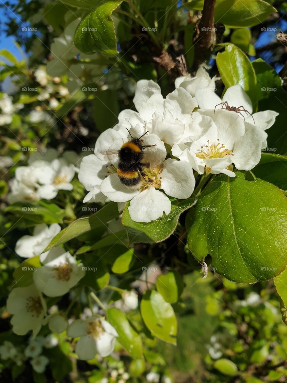 A bumblebee in a tree