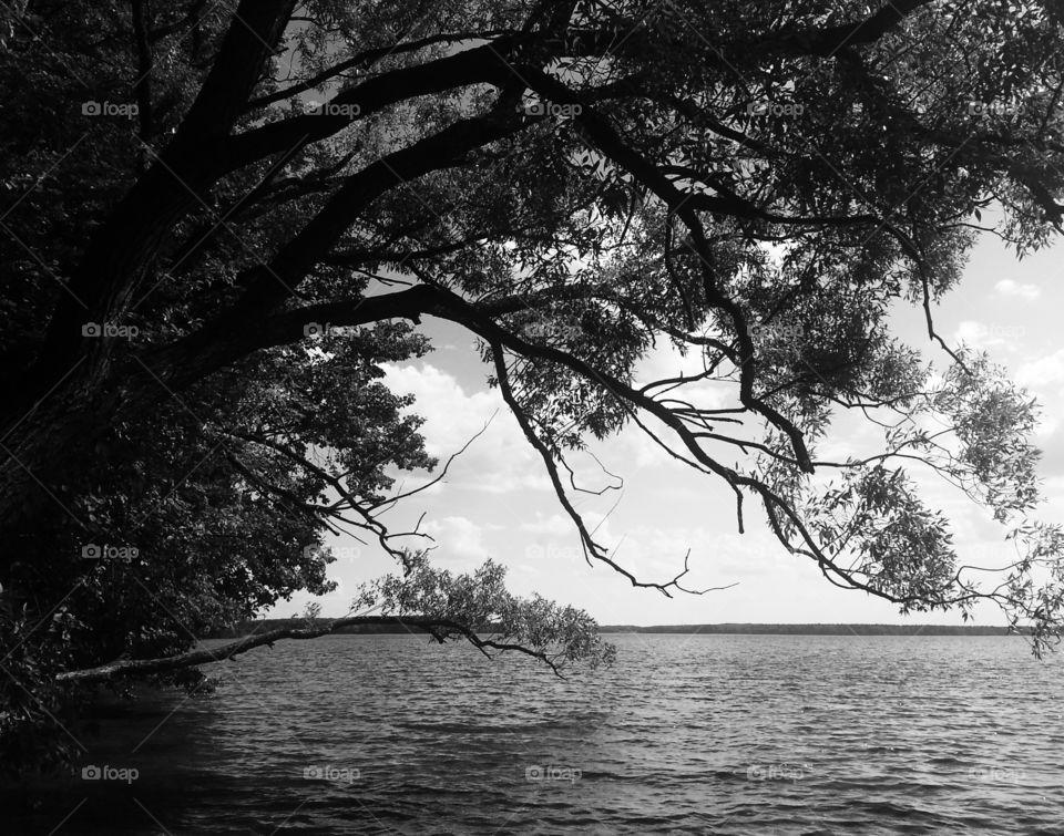 Dramatic tree near beach bw