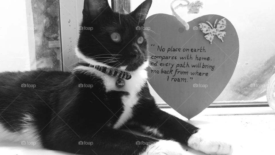 Tuxedo cat, beautiful quotation.